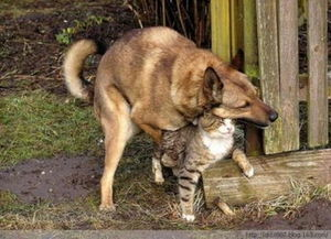 姐妹俩跟狗做爱-...犯 狗强行与猫交配