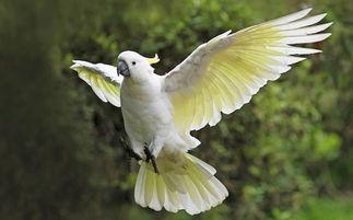 小葵花凤头鹦鹉价格 一般在3000 10000之间