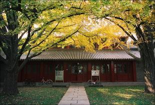 北京大学校园风景欣赏