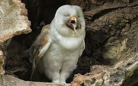蛇女尿道口吞人本子-欧洲大陆上有十三种猫头鹰,其中最为人熟知的可能就要数仓^了,...