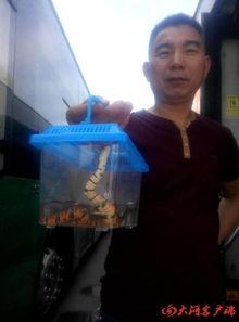 花与蛇图解-男子带蛇上公交被拒将蛇扔车上 手机新浪网