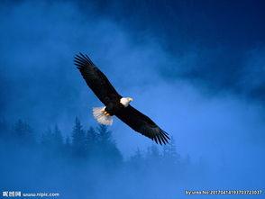 简笔画-如何画一只飞翔的老鹰?