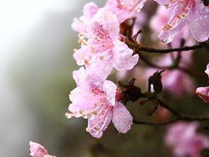 悠游台湾 五月宝岛踏青赏花之旅