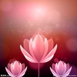 美丽粉色荷花图片