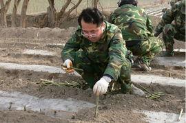 没有军衔,没有番号,不仅要在户外植树、搭大棚、种蔬菜、搬石头、...
