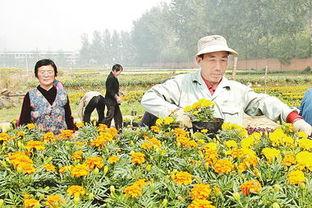 ...漯河市第九届菊花展本月二十六日将在开源森林公园举办 .-漯河市...