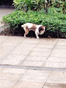 """狗狗抬腿就撒尿   便便""""躺""""在小... 而狗夹在中间,成了被"""