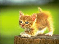 ...出新奇理论 猫寄生虫改变人性格