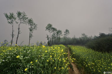 阴霾天   雨中落花   最后的油菜花   度过黑夜   这组油菜花的主题没有想...