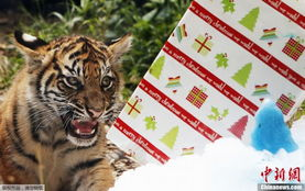 澳一动物园别出心裁 为动物准备圣诞大礼