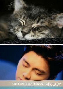 艹猫0补丁krkr2-有的网友笑称,撞脸李易峰,我只服这些猫.   近日,一组李易峰撞脸...