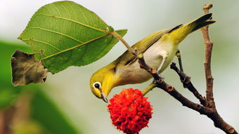 关于鸟的诗句古诗