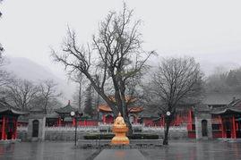 西安楼观中国道文化展区