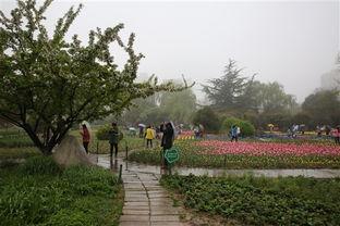 西安植物园第23届郁金香花会启幕