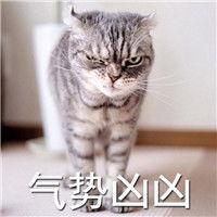 表情 微信猫咪超凶的表情包没有人可以比老子更凶 可爱Q 表情