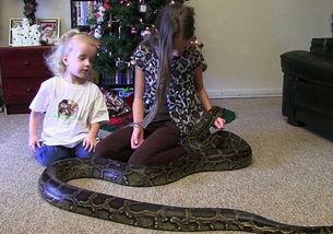 ...幼儿.从其拍摄的视频看,蟒蛇在孩子周围游走,但并没伤害小姑娘...