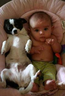告诉你没兄弟姐妹孩子们需要宠物的1000个理由