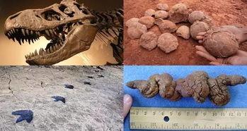 ...脚印(左下)、恐龙蛋(右上)以及恐龙粪便(右下).图片:wiki ...