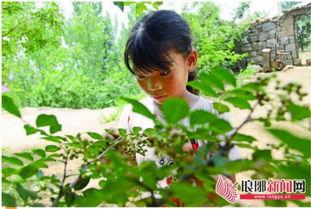 临沂农村孩子的暑假生活 下河抓鱼虾上山逮野鸡