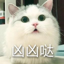 猫猫超凶表情包