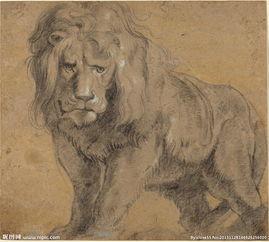 狮子素描图片