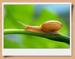 蜗牛的触角向下垂怎么办