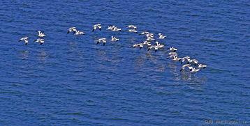 东北候鸟迁徙鄱阳湖