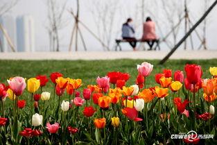 郁见春天 西安植物园2017春季花展开幕