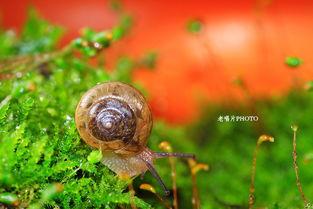 旅行青蛙家门口来蜗牛了该怎么办?