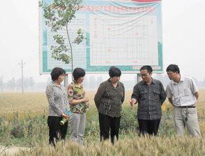 九三学社漯河市委深入推进同心 粮食高产开发基地建设