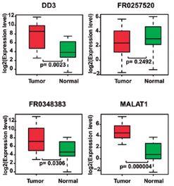 LncRNA 长链非编码RNA 测序