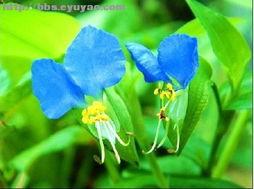 请教,这蓝色的是什么花 花草苑 PHPWind