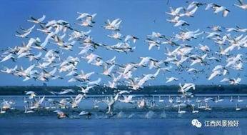 鄱阳湖候鸟-不可错过 江西省八条主题自驾路线出炉