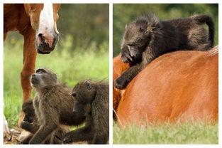 际在线专稿:据英国《每日邮报》... (Plettenberg Bay)一处动物保护...