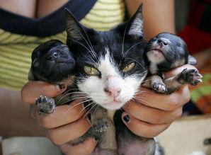 人和狗做爱真人-猫妈和狗儿子 (图1)-巴西猫咪与狗交配生下狗崽 猫崽全夭折