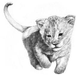 素描小狮子的绘画技法