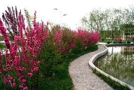 榆叶梅、海棠、丁香、蔷薇等观赏树木繁花似锦,镇区处处绿草如茵,...