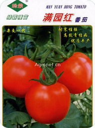 红蕃茄hk16-满园红番茄