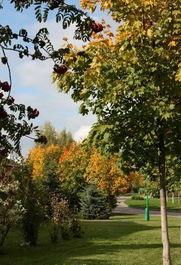 ...的莫斯科,最为灵动的是那大自然的秋色,美丽的白桦林在大自然...