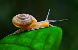 小小的蜗牛的家
