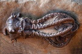 ...最恐怖最罕见的动物 组图