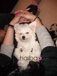 大明星家的小狗狗来了 美女明星宠物秀现在开始 为你最喜欢的小家伙...