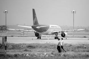 坐东航的航班应该怎么查询航班动态?