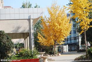 学院血红天-秋天的学校图片