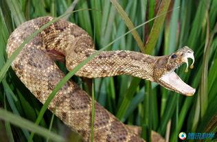 埃博拉病毒源自一条邪恶的蛇:关于埃博拉病毒的谣传之一是几内亚和...