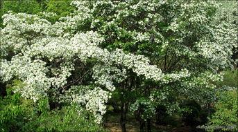 花与树影评-花满树,树满花