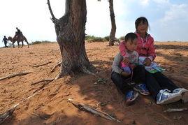 kigurumi神木林兔子-红碱淖位于陕西神木县西北,系中国最大沙漠淡水湖,也是世界上最大...