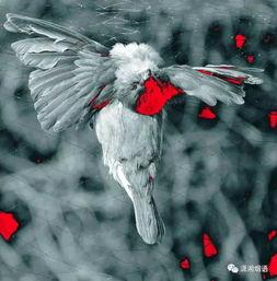 描写鸟的诗句古诗-可我的前方,却布下了一张邪恶的网.回家,误入了恶人布设的陷阱....