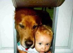 被门夹?被狗夹?