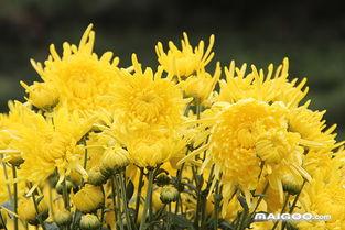 一年四季各开什么花 春夏秋冬都盛开的花 十大品牌网